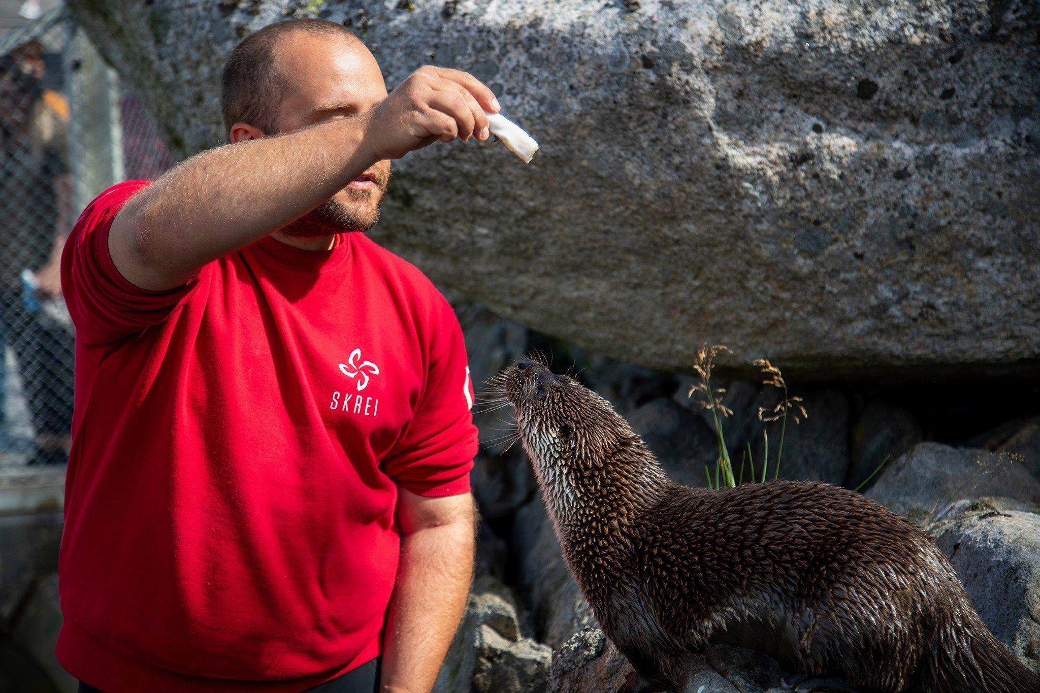Male feeder otter